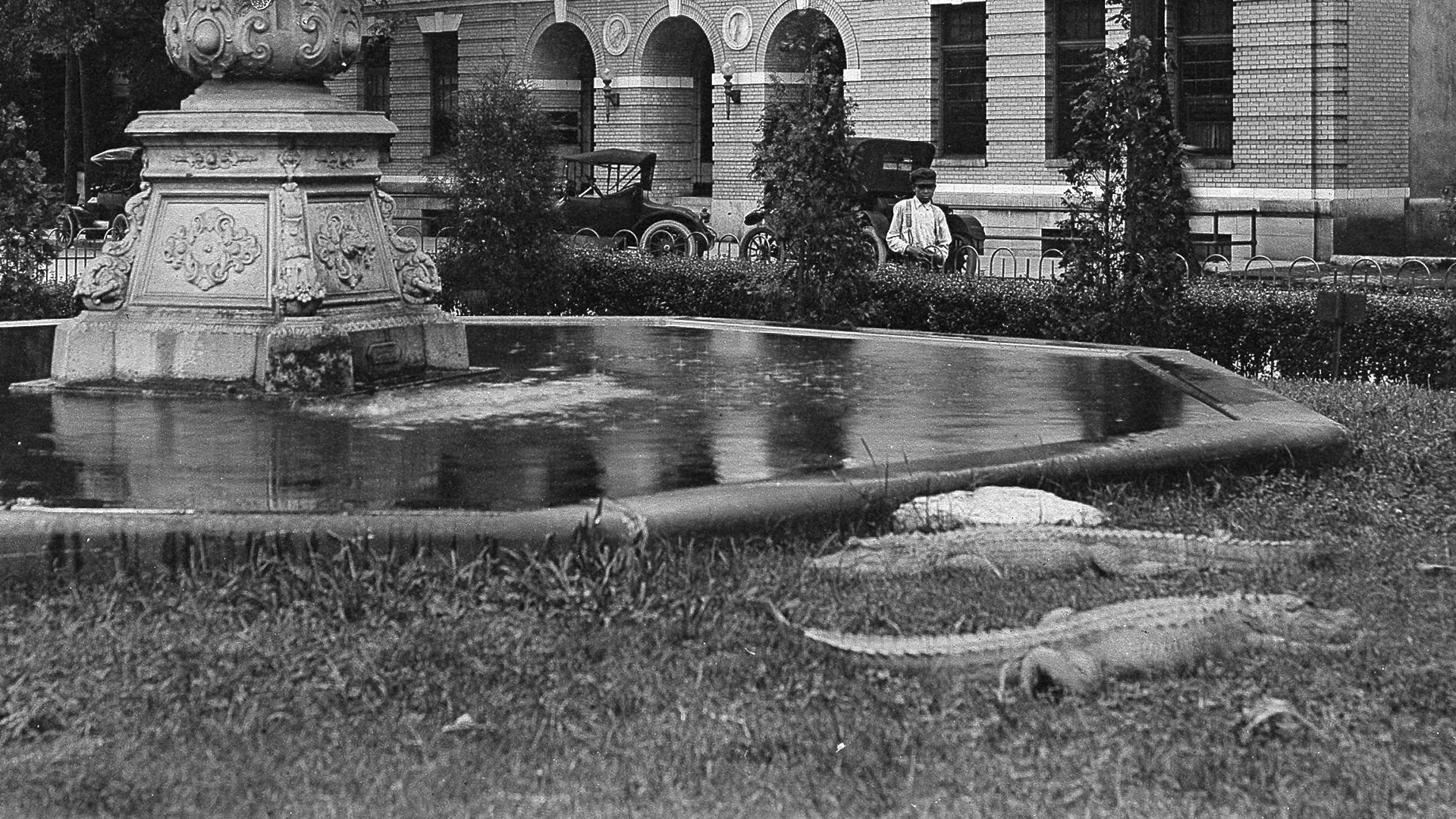 The days when alligators roamed the streets in Chattanooga