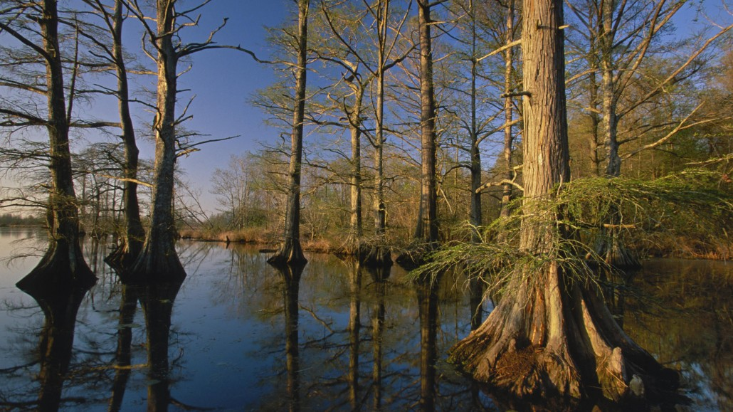Bald-Cypress-Trees-at-Sunset-Reelfoot-Lake-Tennessee