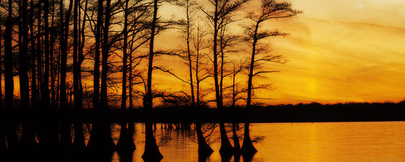 Tennessee is serious when it comes to our lakes, the story of Reelfoot Lake and the Night Riders
